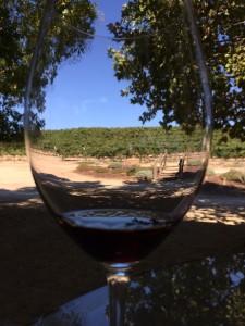 Through a wine glass
