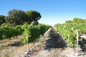 Ribera del Duero Spain