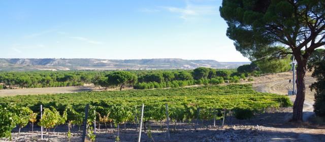 Ribera del Duero: Spain's Rising Star