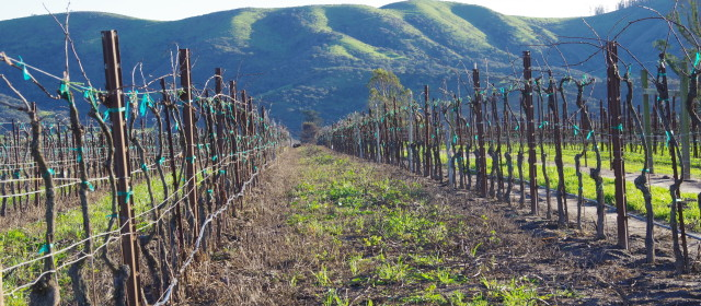Sta. Rita Hills AVA: Hallowed Ground for Pinot Noir & Chardonnay