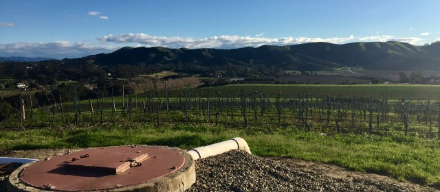 Babcock Winery: A Revolution in the Sta. Rita Hills