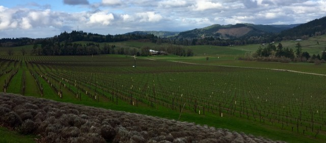 Exploring Oregon Wine Country
